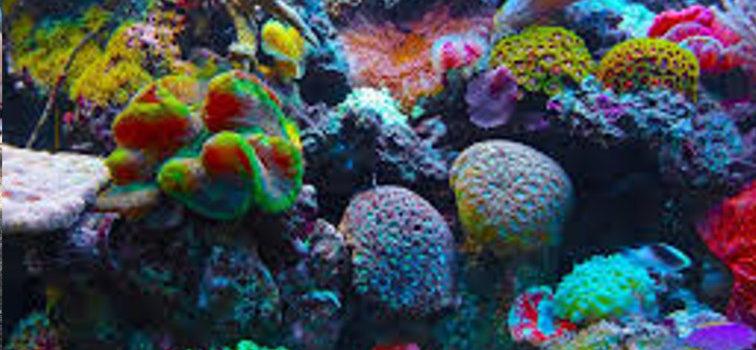 Unterwasserwelten-Kunst beim KJR
